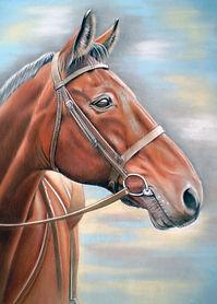 dark bay horse portrait pastels