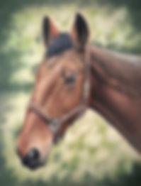 Horse portrait pastels