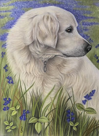 pet golden retriever portrait