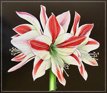 acrylic flower painting