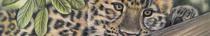 wildlife artist lynn sturman