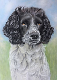 springer spaniel pet dog painting