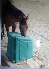 mt horse.jpg