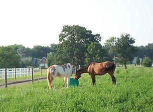 2-horses-drinking.jpg
