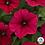 Thumbnail: Petunia Easy Wave (3 colors)