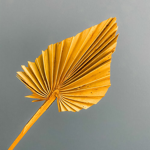 Dried Palm Orange - Stem