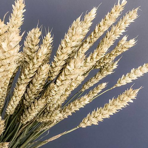 Wheat Naturel - Bunch
