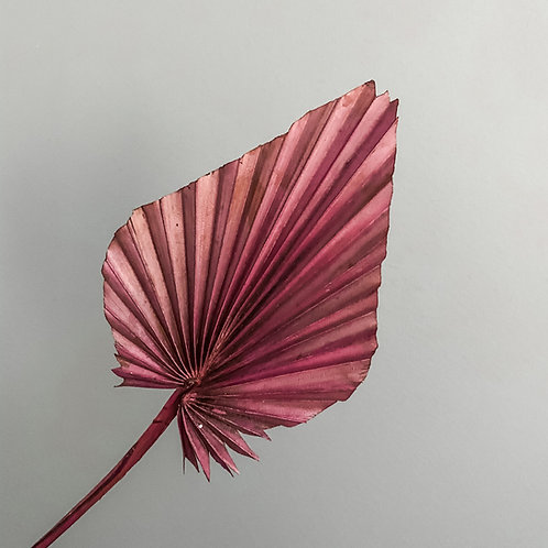 Dried Palm Dark Red - Stem
