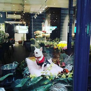 We are opening! #flowers #tearoom #chihu