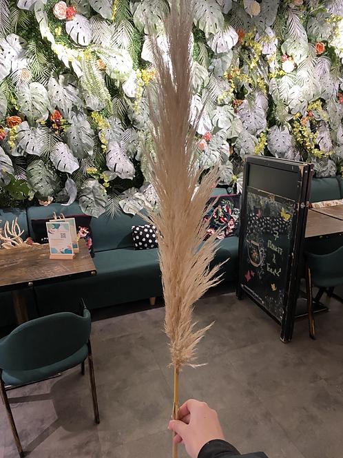 Dried Pampas Grass 100cm - Stem
