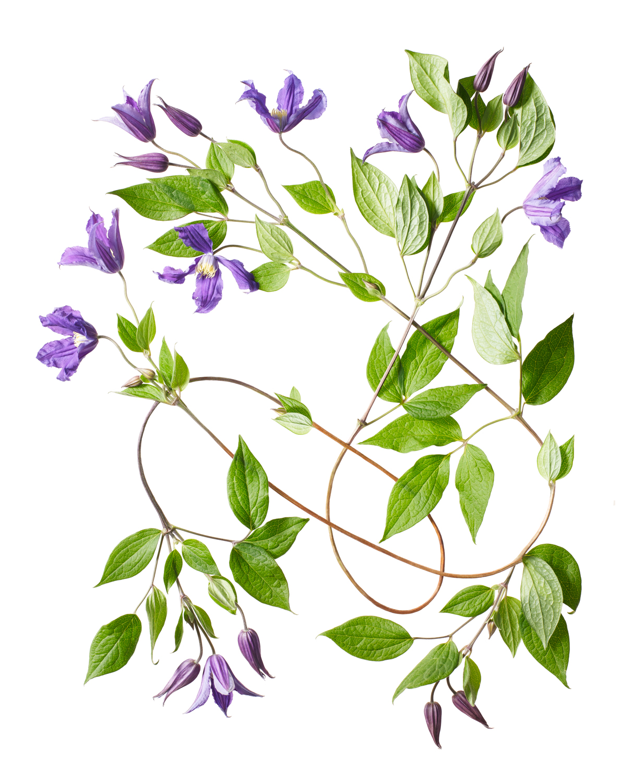 Sayers Flowers-14.jpg