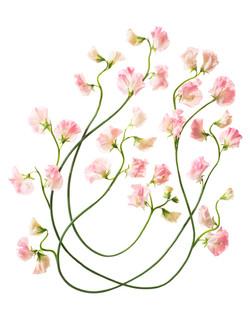 Sayers Flowers-15.jpg