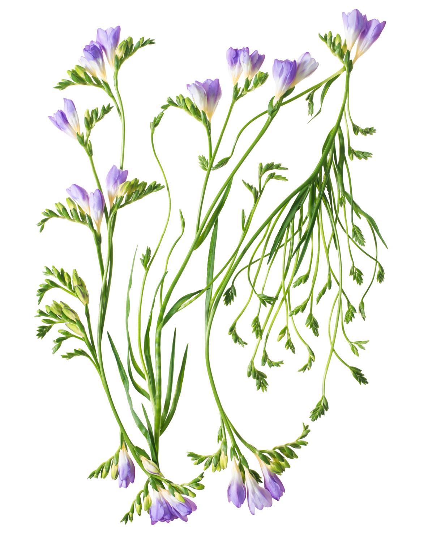 Sayers Flowers-11.jpg
