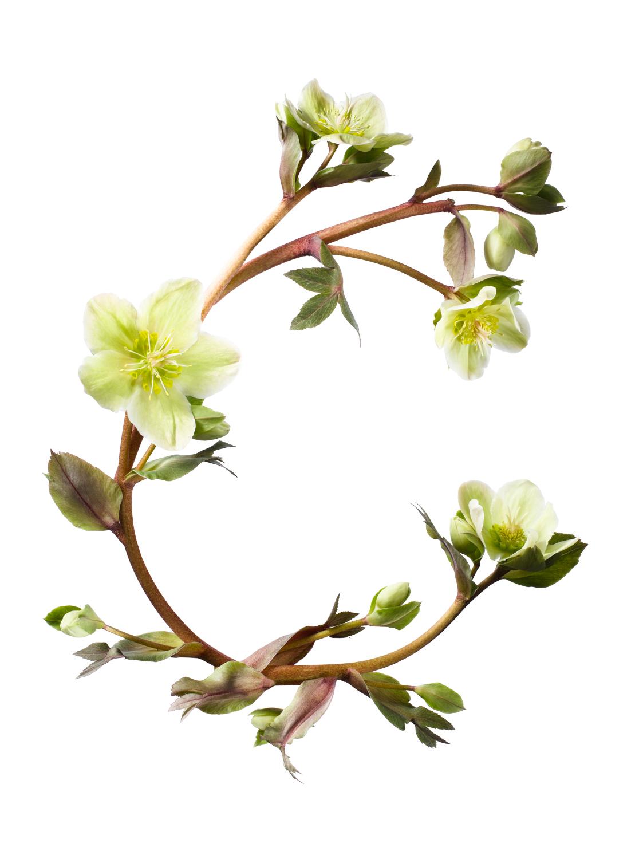 Sayers Flowers-8.jpg