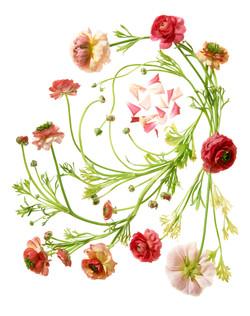 Sayers Flowers-17.jpg