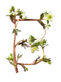 Sayers Flowers-9.jpg