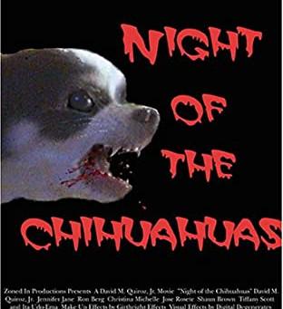 Night of the Chihuahuas