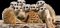 Mogo Zoo.png