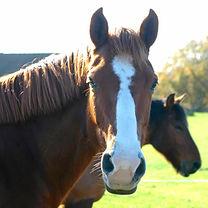 horse katie 1.jpg