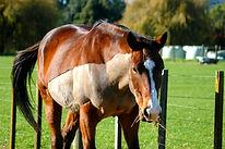 horse pj.jpg