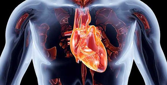Body 10 Heart.jpg