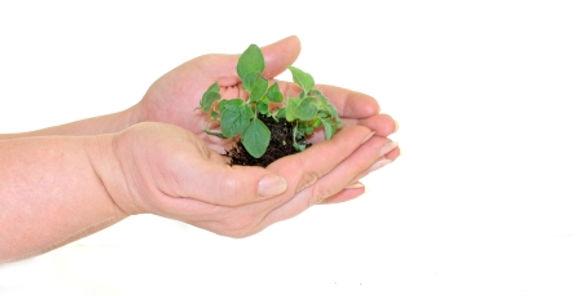 plant-in-hands_zkcxFkYd.jpg