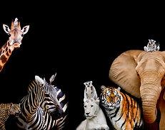 Earth 21 Animals.jpg