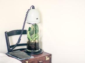Terrarium 3 - the lamp edition.