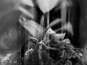 Terrarium 2 (Phalaenopsis)