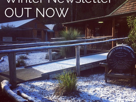Winter Newsletter!