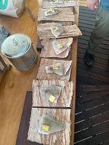 Barramundi in paperbark.JPG