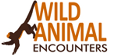 11 Wild animal en.png