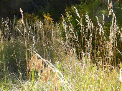 Lit grasses