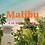 Thumbnail: Malibu EDP 50ml Spray