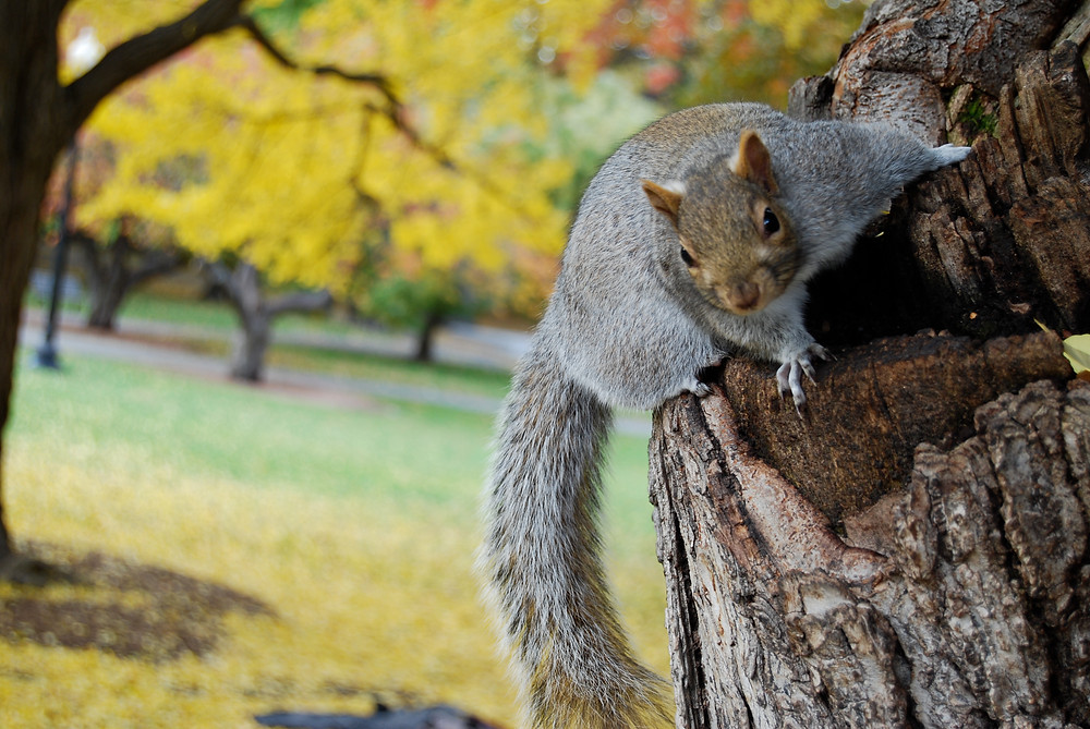 squirrel on tree in autumn