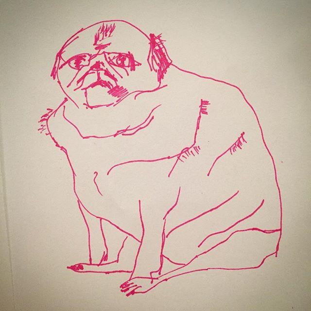 Funny Pug-y sketchy #art #artistherapy #sketch #pink #pug #funny #chubbypug #dog