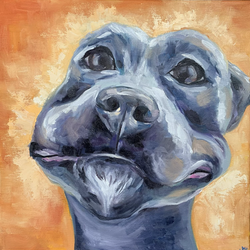 Muppet Pup