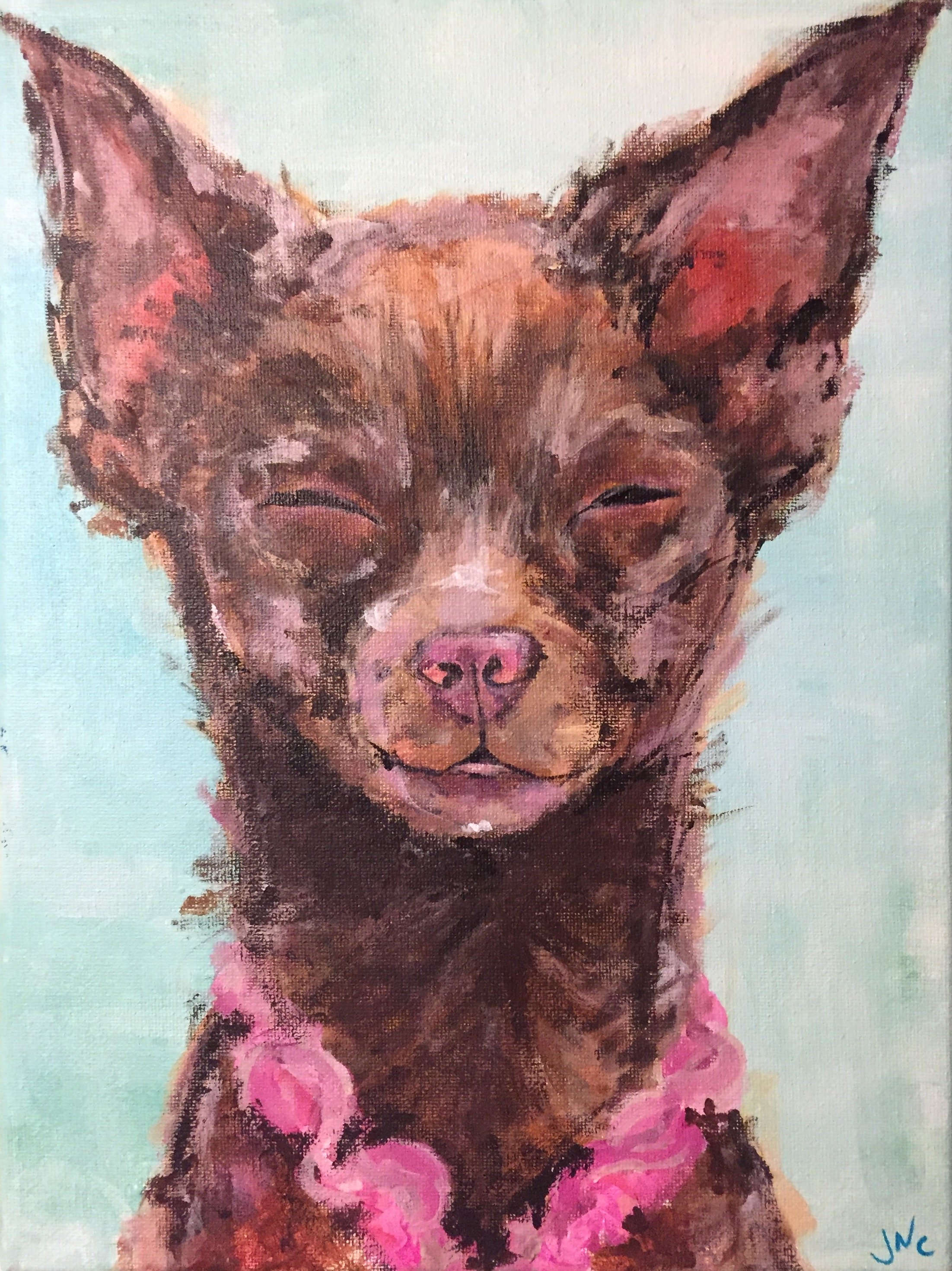 Chia the Chihuahua