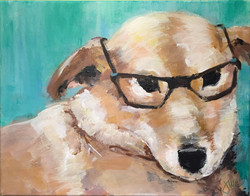 Lewis the dog with glasses