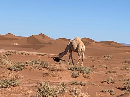Desert_6.jpeg