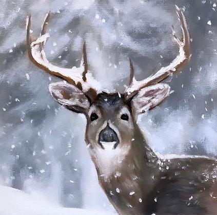 Young Deer in Winter