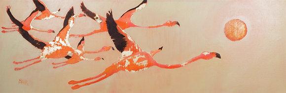 Flamingo Sun