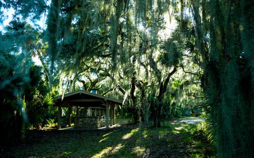 Florida Canopy