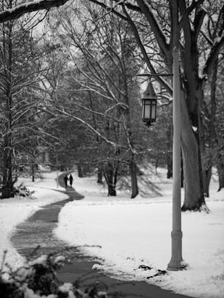 MSU Campus Winter
