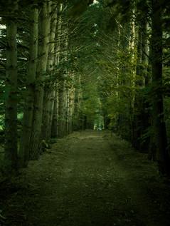 Northern MI Trail