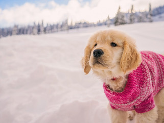 Cold Weather Pet Precautions