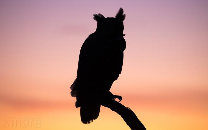 Bird_GHOSilhouette_H.jpg