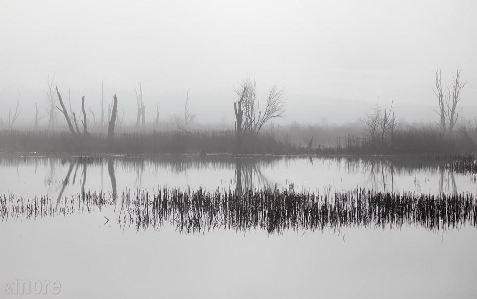 Landscape_WileySloughBW_H.jpg