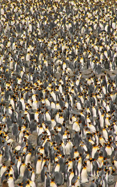 Bird_Penguins2_V.jpg