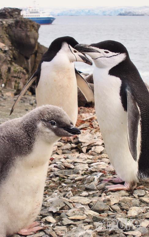 Bird_Penguins1_V.jpg